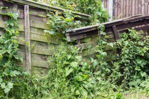 防草シート おすすめ 雑草